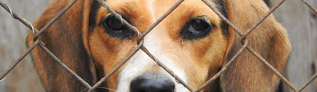 A Small Step to Protect Animals in the Fight to End Animal Abuse